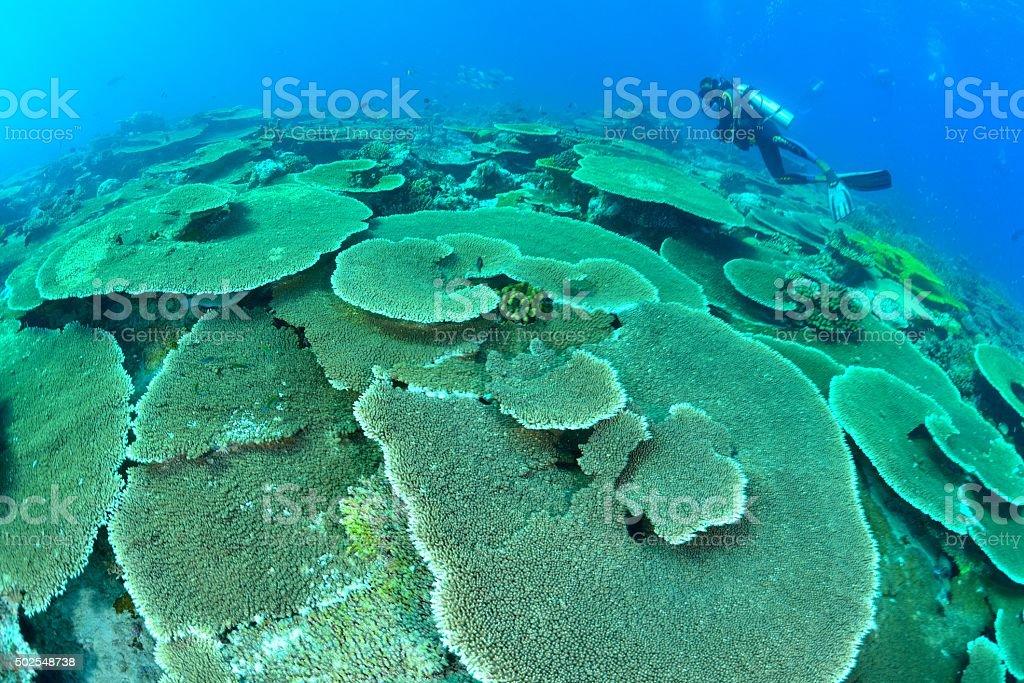 coral e sol foto de stock royalty-free