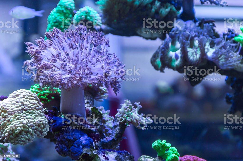 coral aquarium stock photo