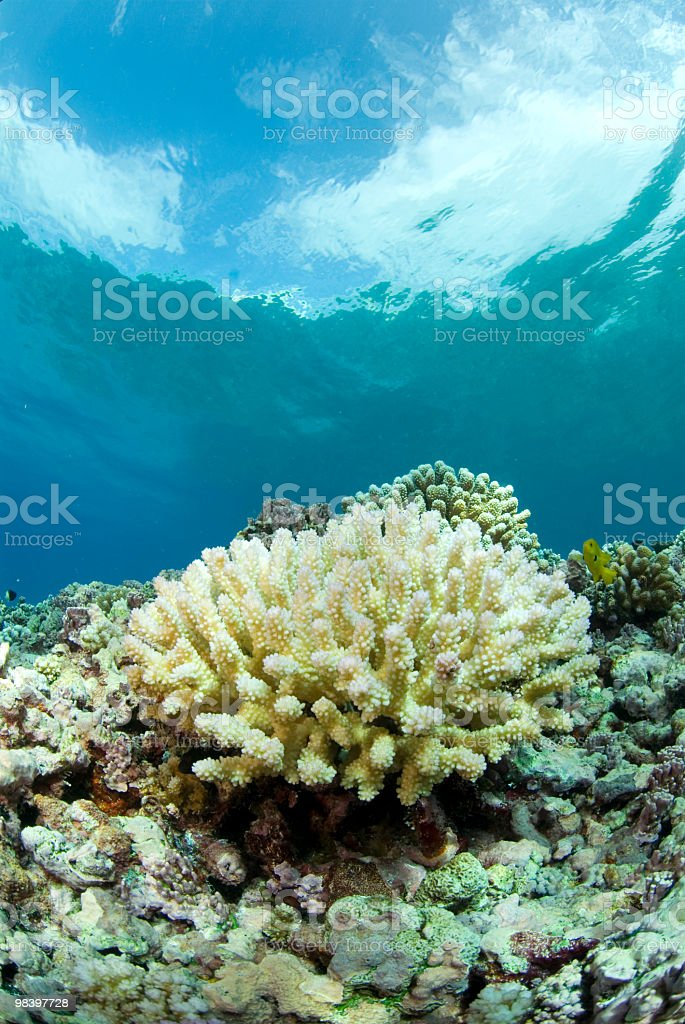 coral bleaching stock photo