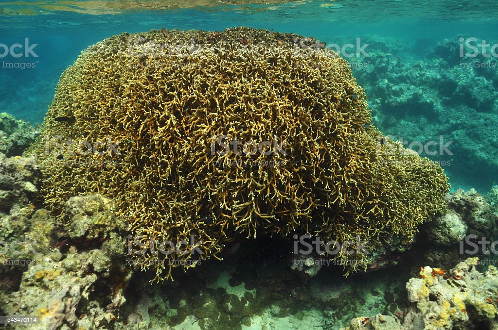 Coral block reaching surface stock photo