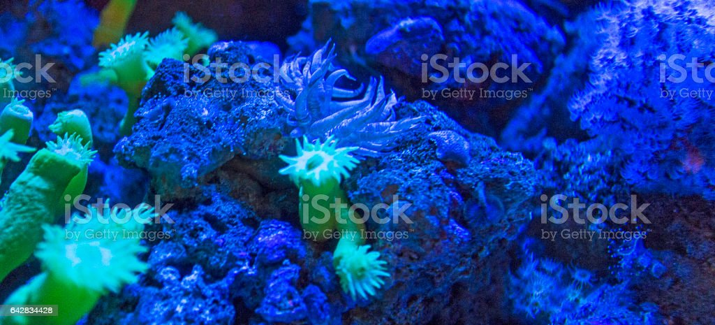 coral close up view stock photo