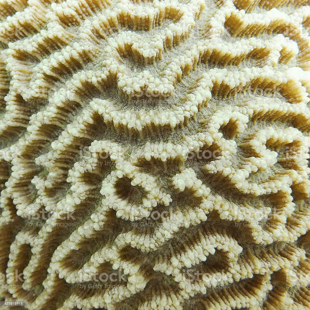 Coral close-up royalty-free stock photo