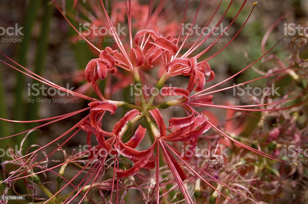 Coral Colored Floral Explosion royalty-free stock photo