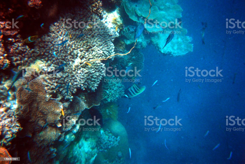 coral colours royalty-free stock photo