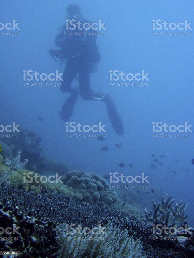 coral diver royalty-free stock photo