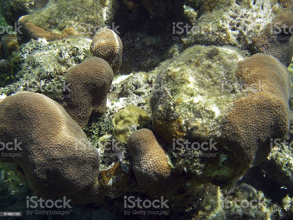 Coral from barrier Reef royalty-free stock photo