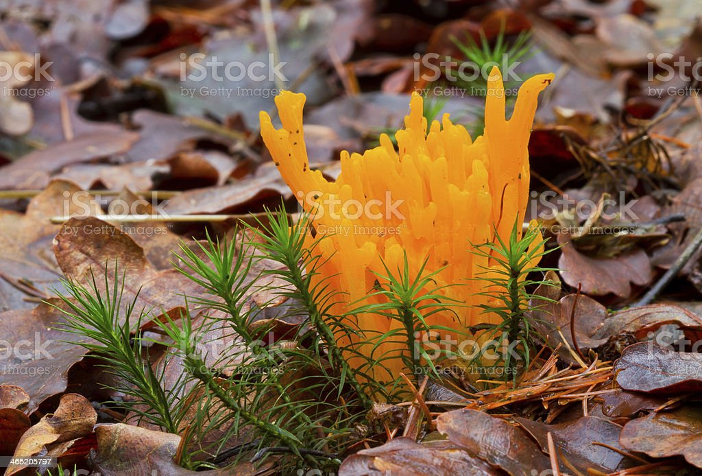 Coral fungus and moss stock photo