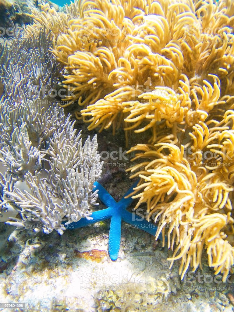 Coral garden stock photo