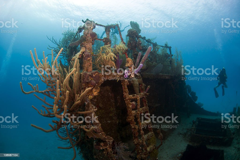 Coral gardens on shipwreck stock photo