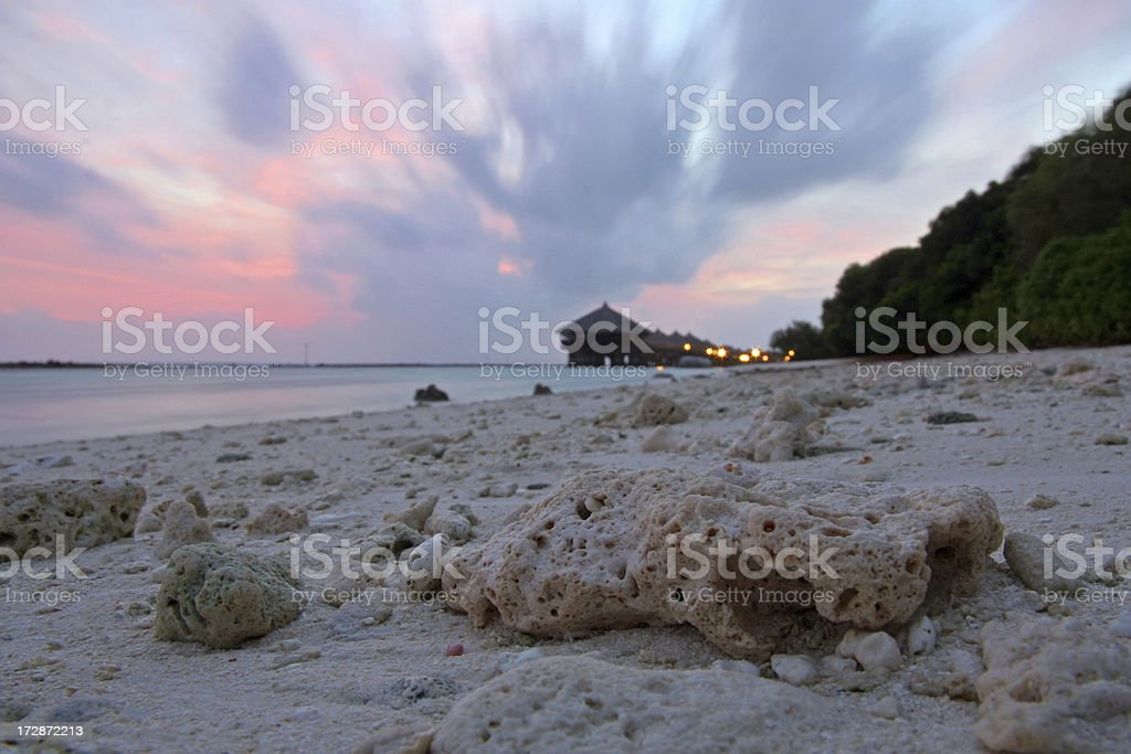Coral in Sunset royalty-free stock photo