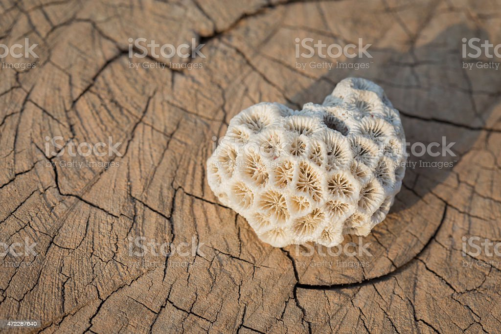 Coral is over wood background royalty-free stock photo