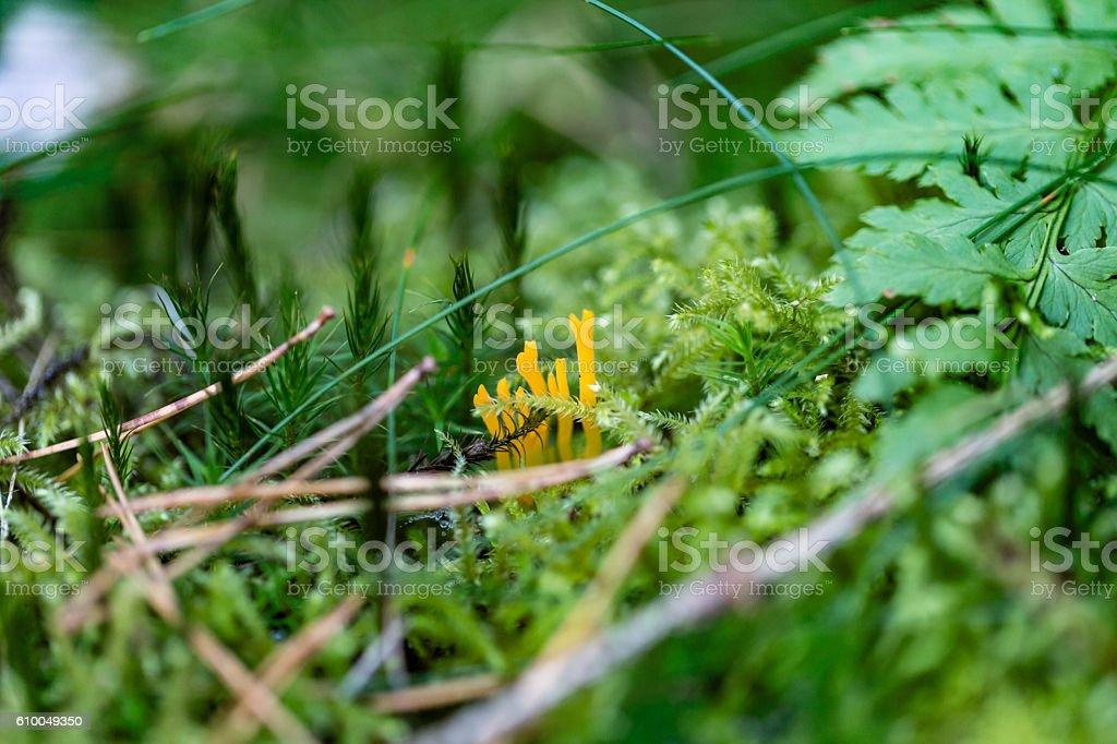 Coral mushroom stock photo