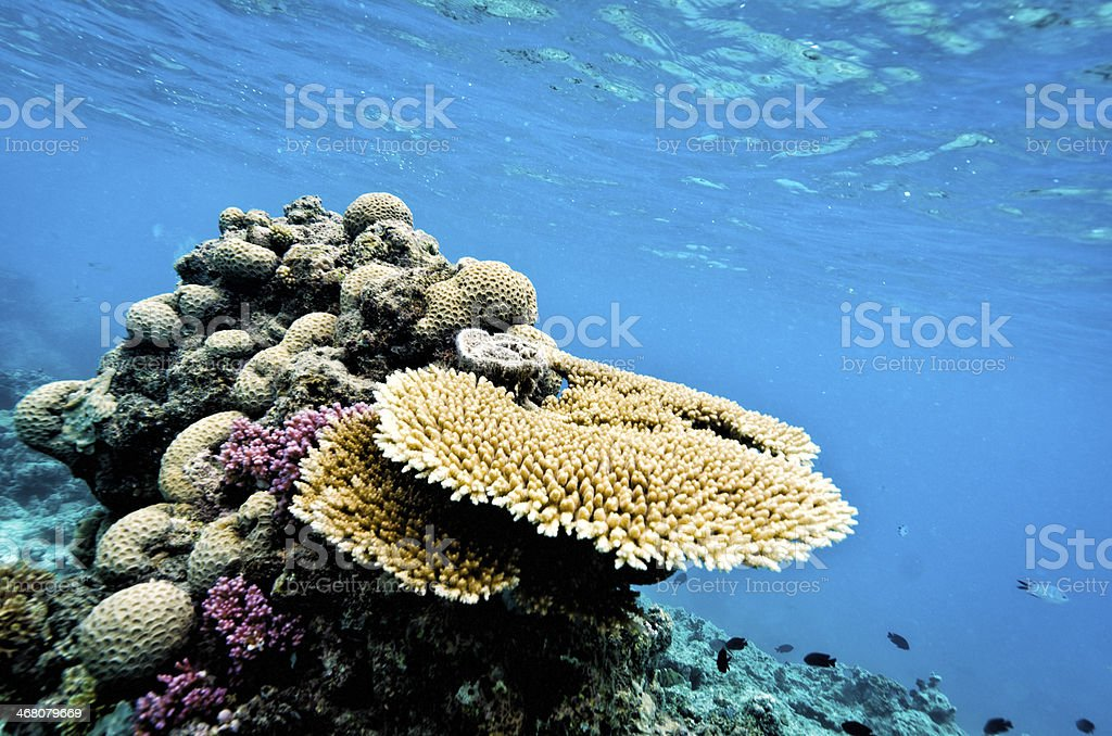 Coral of Australia's Great Barrier Reef stock photo
