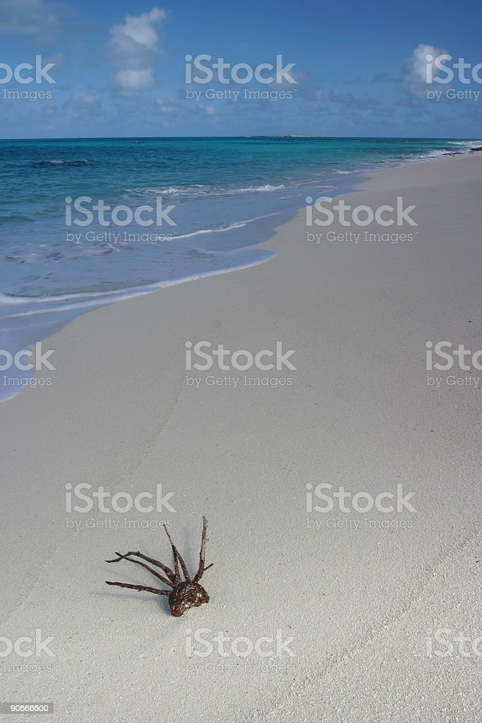 Coral on Beach royalty-free stock photo