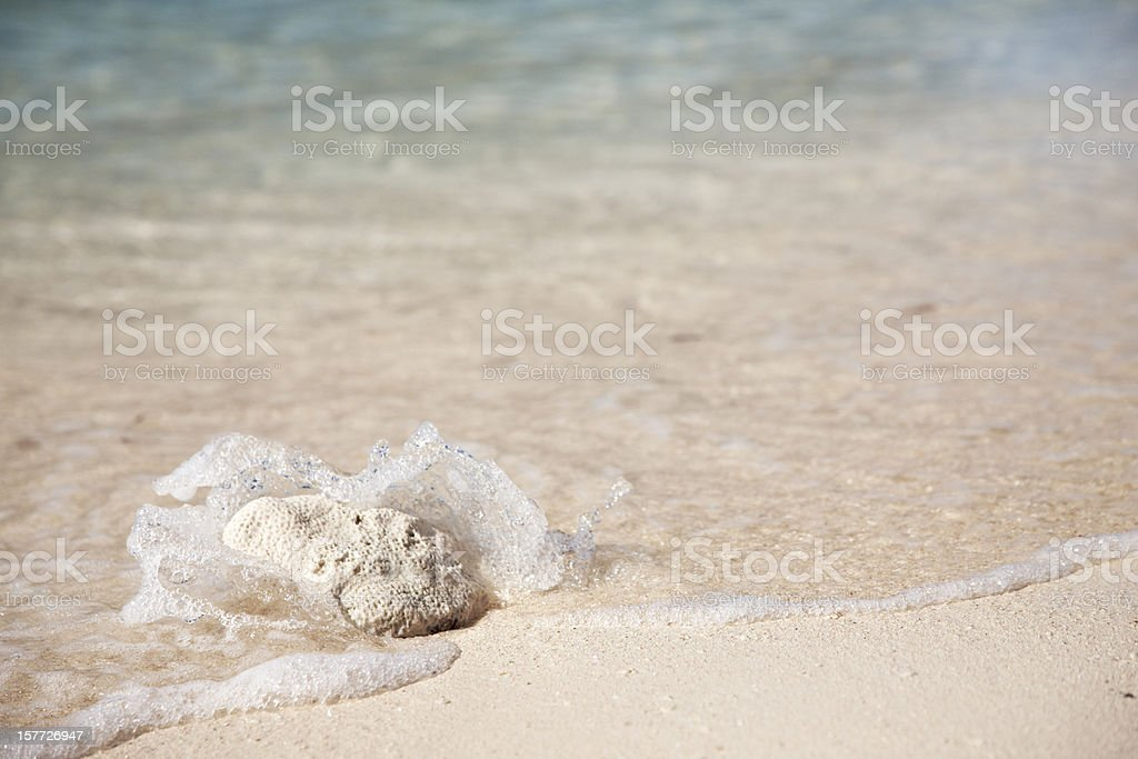 Coral on Sand With Wave Splashing Over, Copyspace royalty-free stock photo