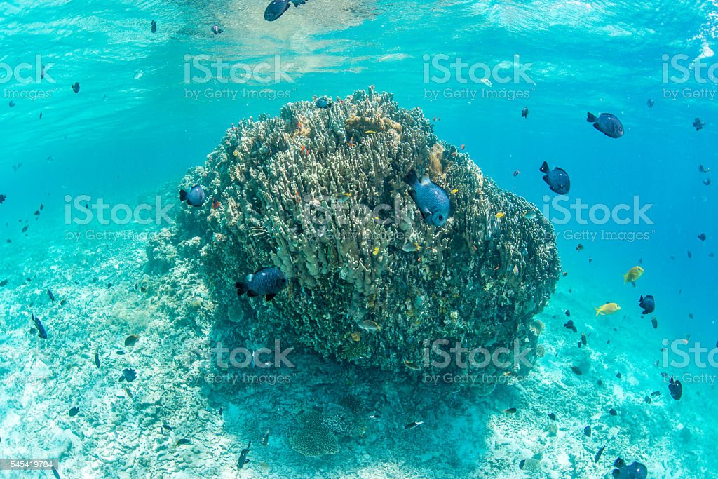 Coral foto de stock royalty-free