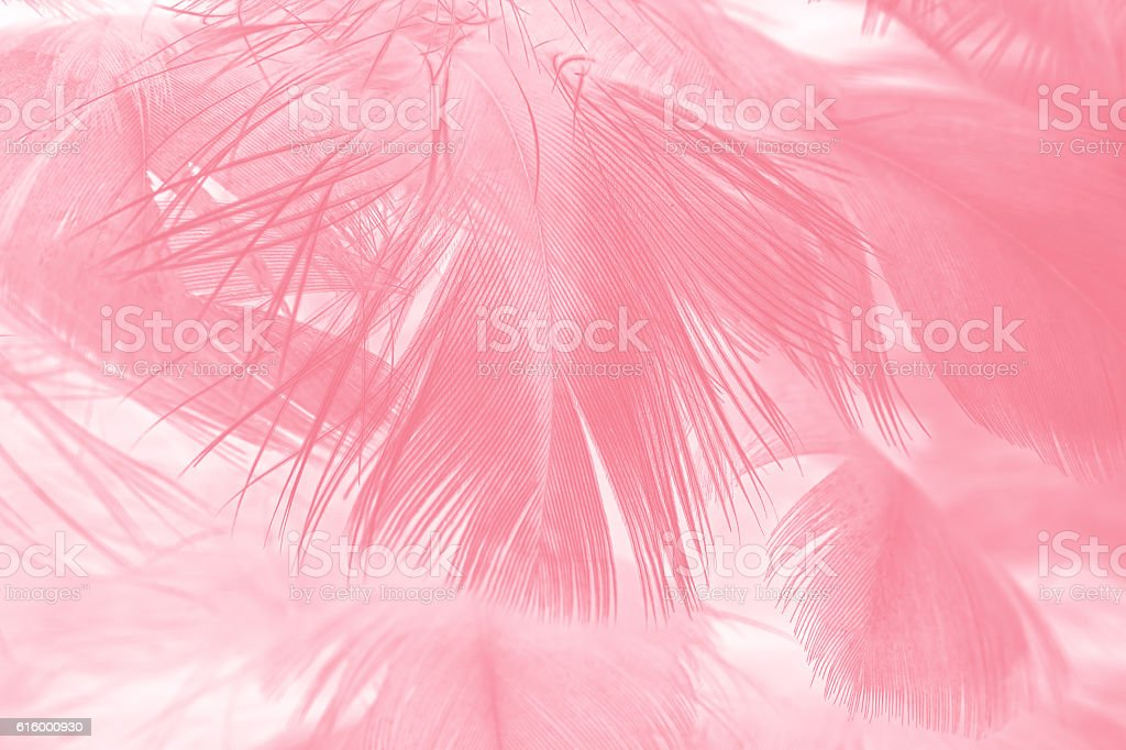 Coral Pink vintage color trends feather texture background stock photo