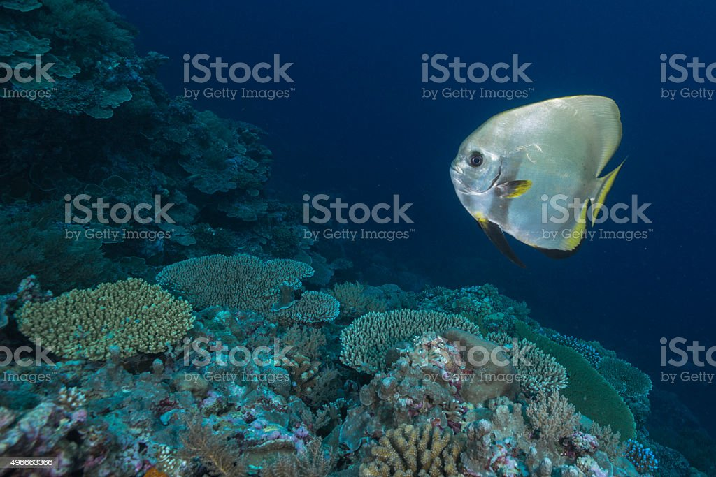 Coral reef and fish - Palau, Micronesia stock photo