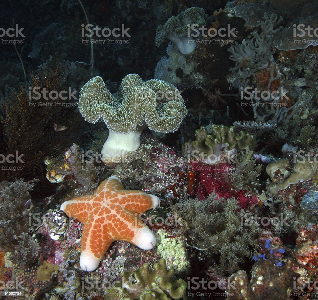 Coral Reef and Starfish royalty-free stock photo