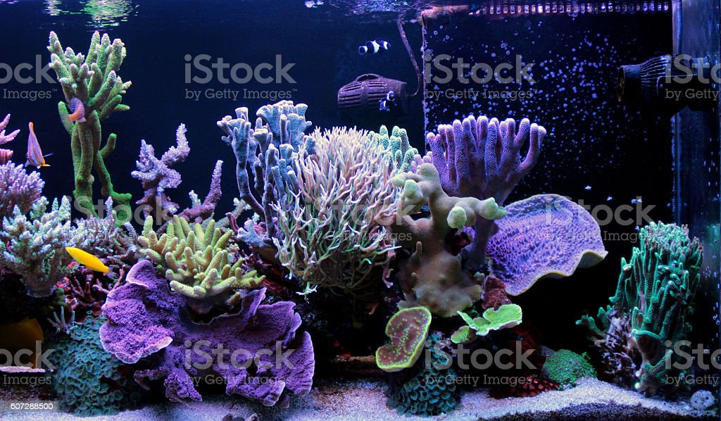 Coral reef aquarium tank stock photo