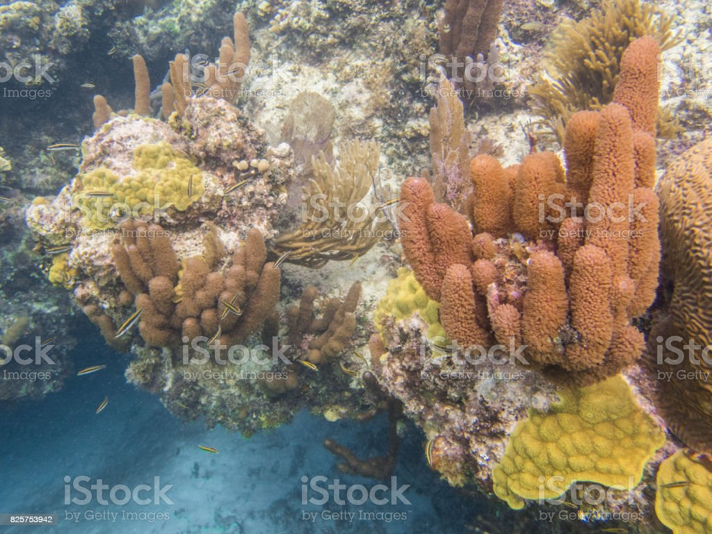 Coral reef arch up close stock photo