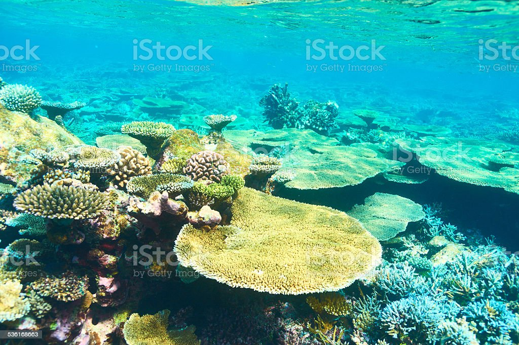 Coral reef at Maldives stock photo
