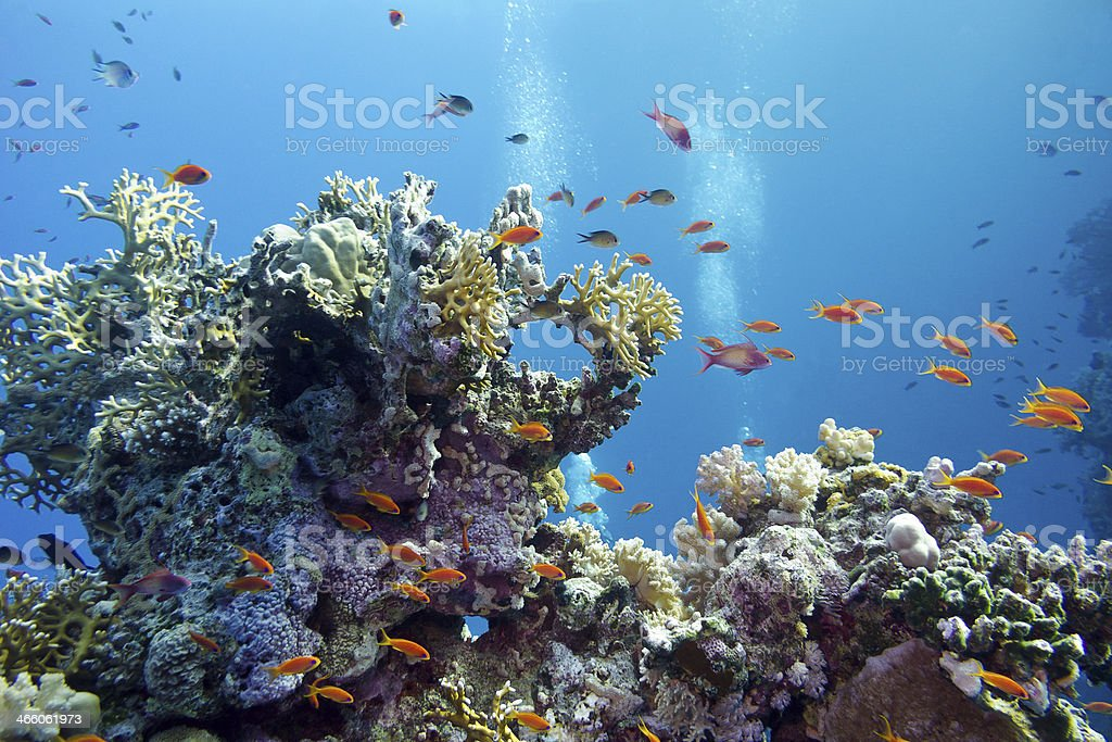 coral reef at the bottom of tropical sea stock photo
