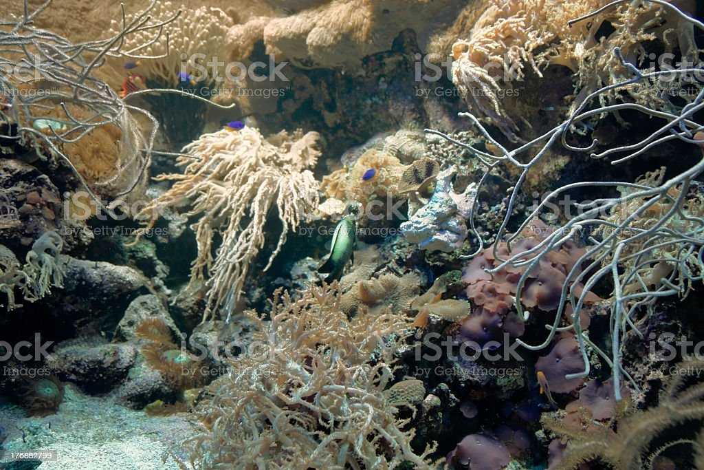 Coral reef detail royalty-free stock photo