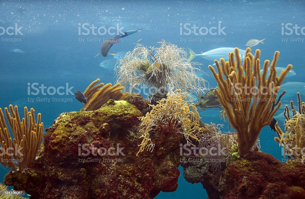 Coral Reef from Below stock photo