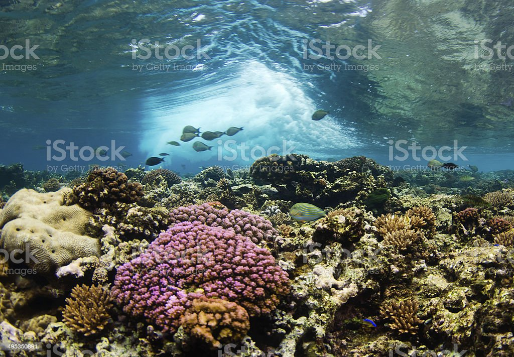 Coral Reef in Motion stock photo