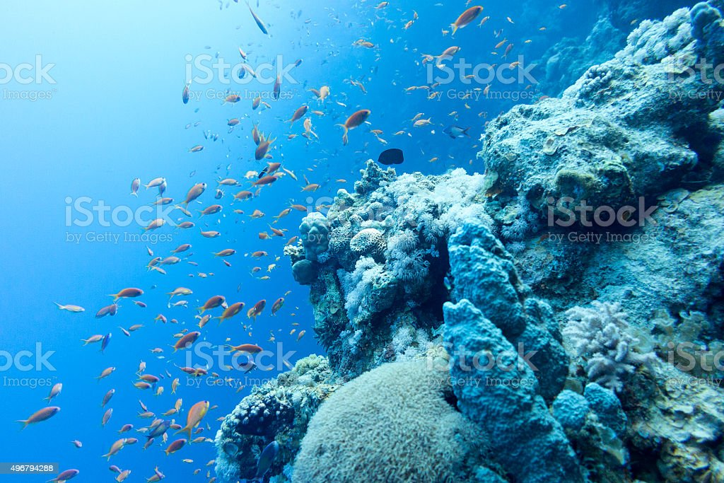 coral reef in tropical sea at great depths, underwater stock photo