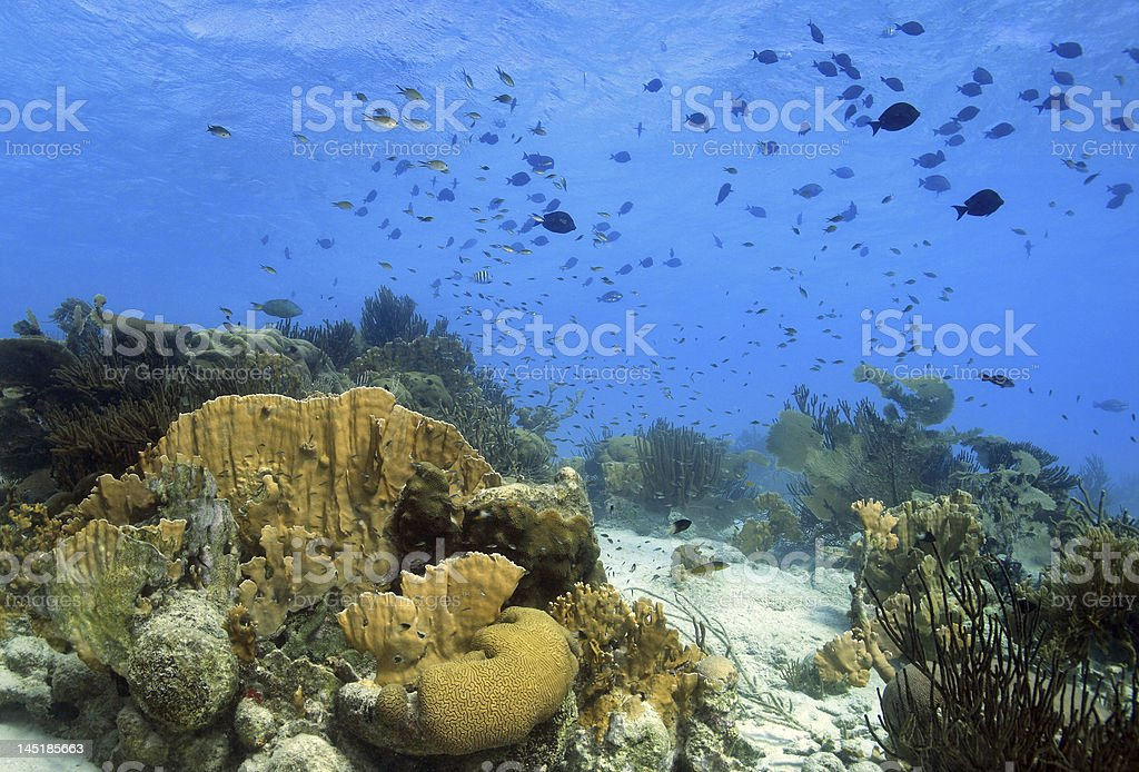 Coral reef Landscape royalty-free stock photo