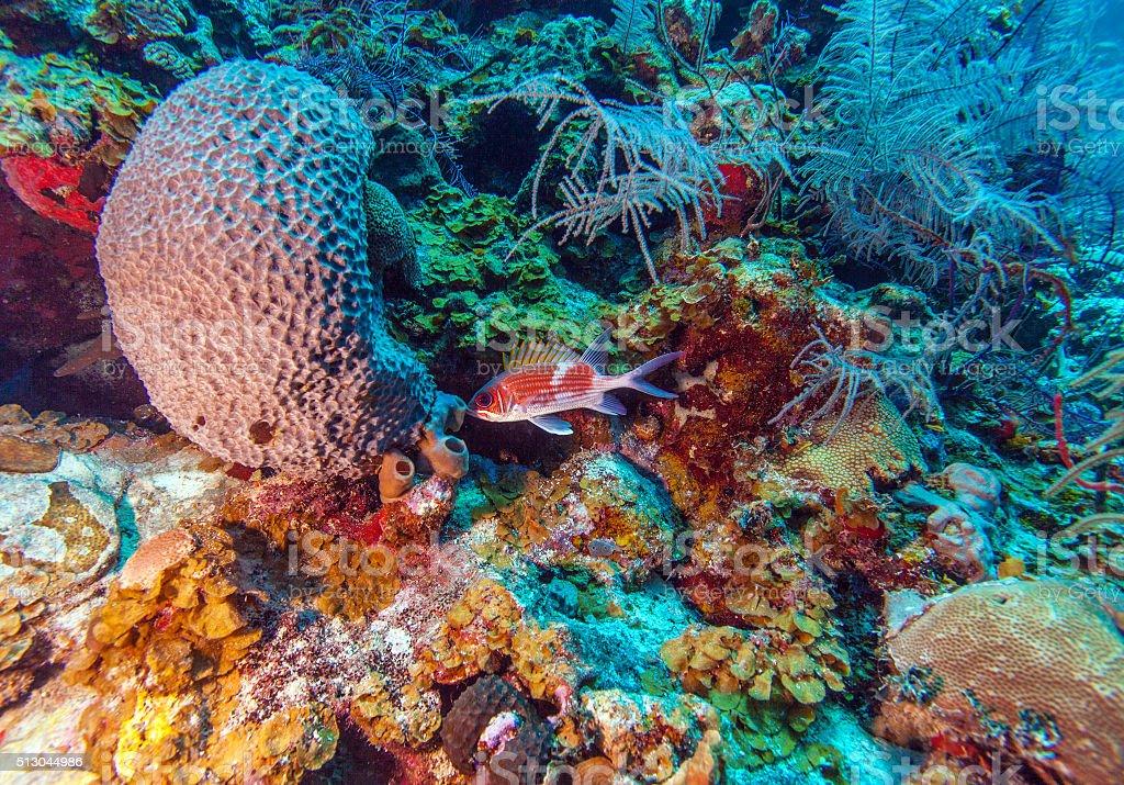 Coral reef near Cayo Largo stock photo