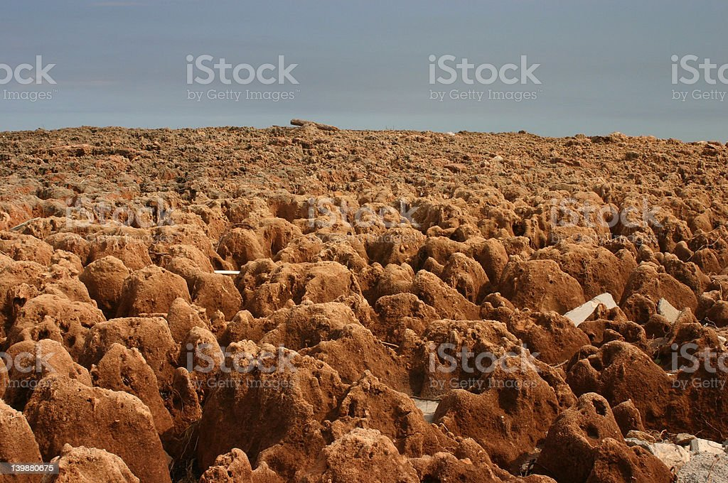 Coral Reef on Beach royalty-free stock photo