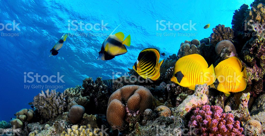 Coral reef -Panorama stock photo