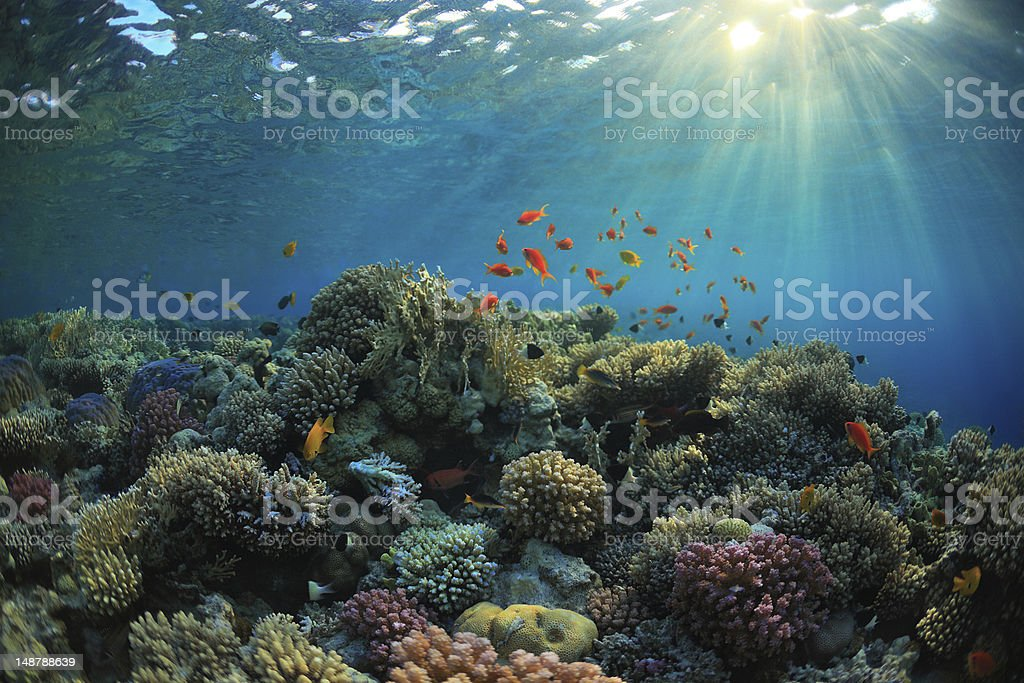 Coral reef stock photo
