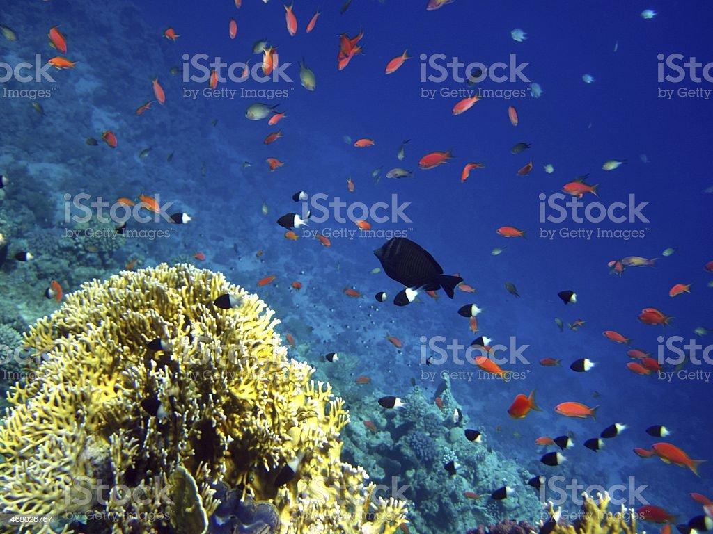 Recife de Coral foto royalty-free