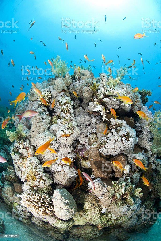 Coral reef scene stock photo