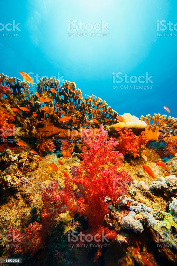 Coral reef   Sea life   Underwater photography stock photo