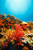 Coral reef   Sea life   Underwater photography