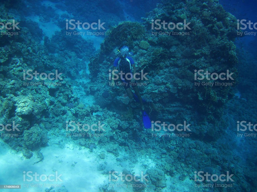 Coral reef snorkeler royalty-free stock photo