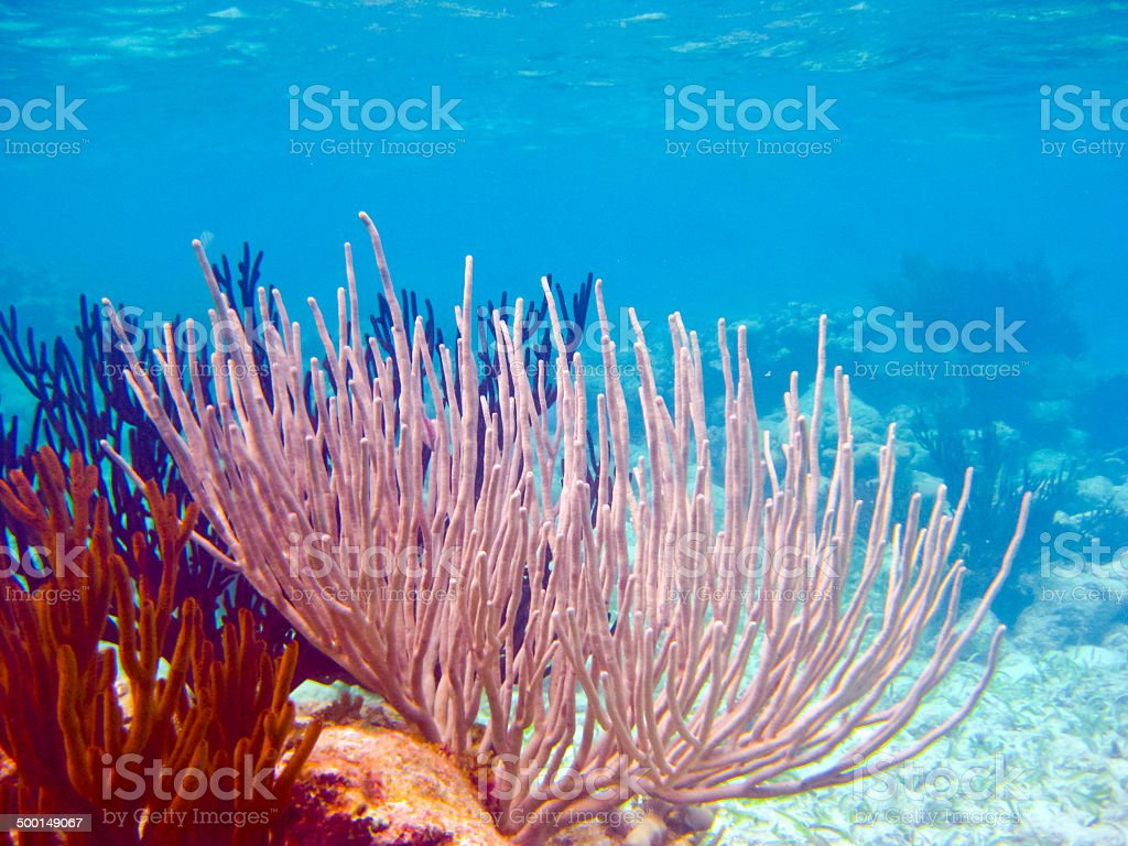 Coral reef under water stock photo