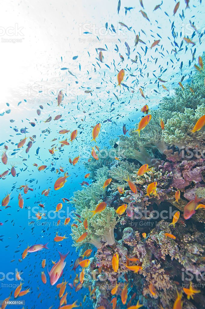 Coral reef wall in the sun stock photo