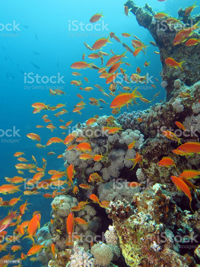 Coral reef wall stock photo