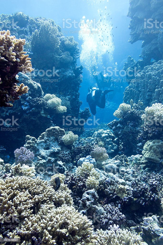 coral reef with divers in tropical sea, underwater                                                                                                                                  water stock photo