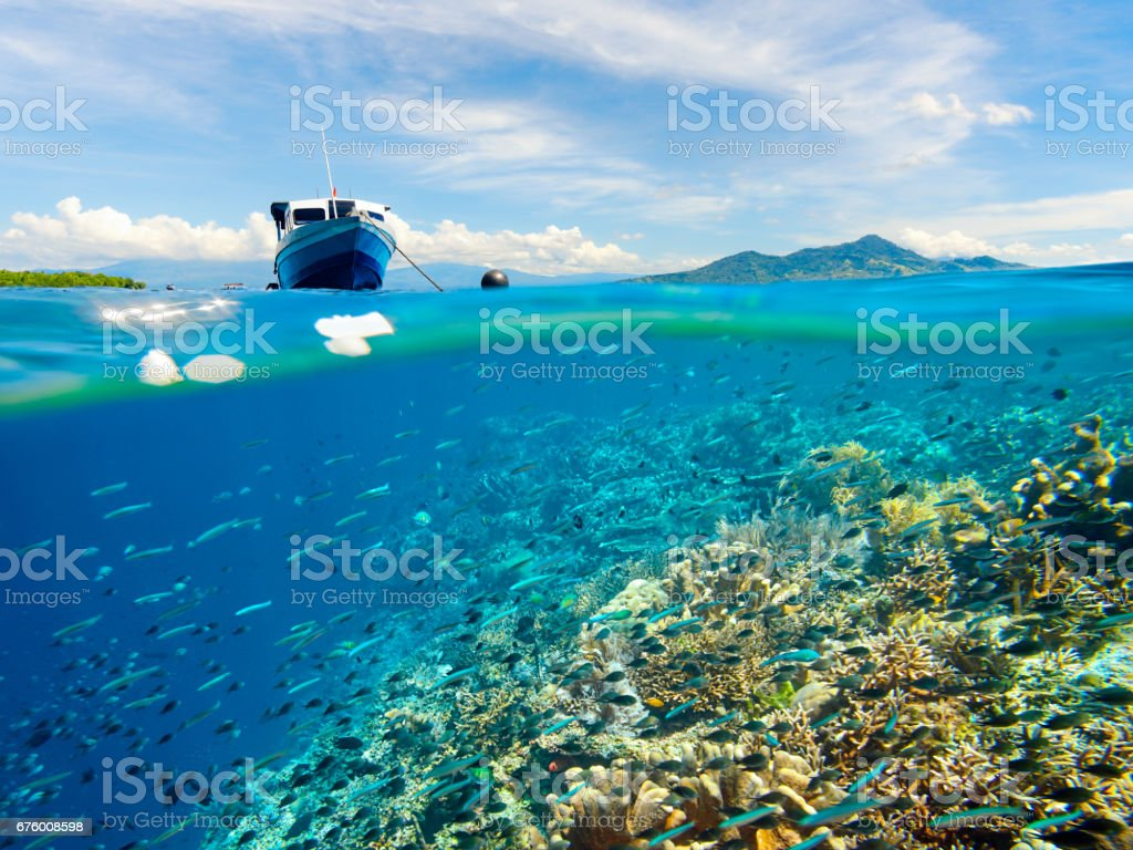 Coral reef with many fish near Bunaken Island, Indonesia stock photo