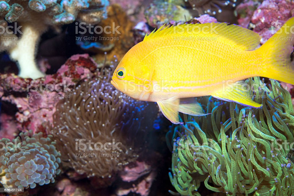 Coral reef with soft and hard corals with exotic fish stock photo
