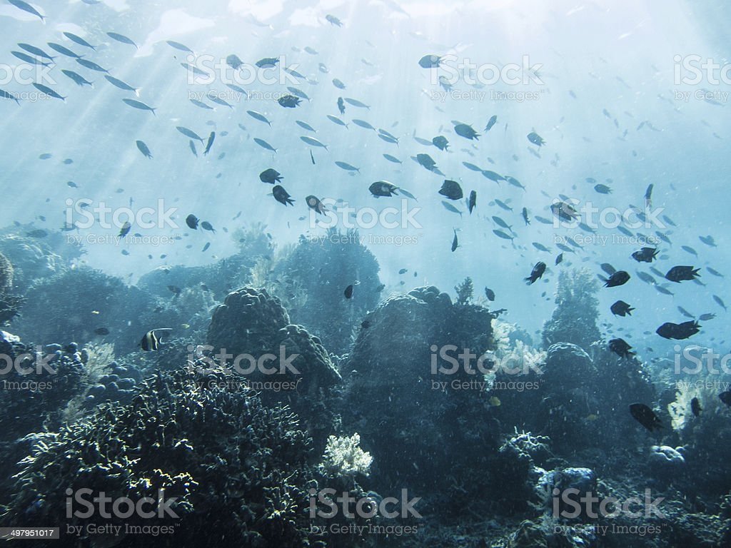 Coral reefs in Bunaken royalty-free stock photo