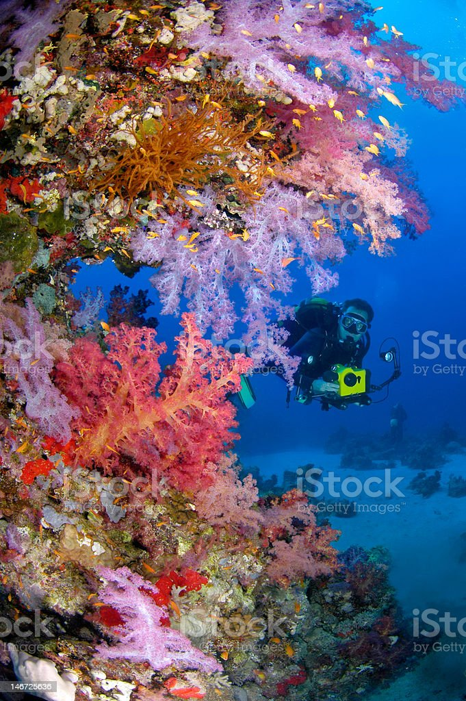 Coral richness stock photo