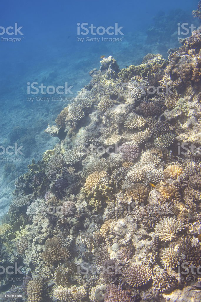 Coral scene at Red Sea royalty-free stock photo